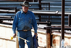 Cowboy working bison  during bison roundup, Ladder Ranch, west of Truth or Consequences, New Mexico, USA.