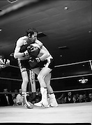 Nash vs Leon Championship Fight.    (N55)..1980..14.12.1980..12.14.1980..14th December 1980..At the Burlington Hotel, Dublin, Charlie Nash defended his European Lightweight Title when he took on Spain's Francesco Leon..Nearing the end of the fight two tired boxers hold on to each other for support..The fight over Charlie Nash is pictured raising his hand in triumph after a unaminous decision by the judges.