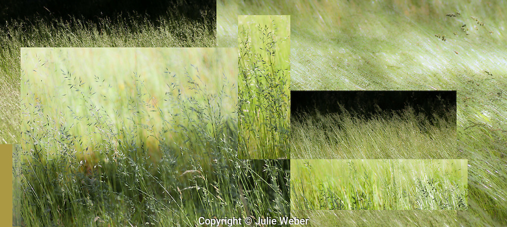 """The beauty of grasses stir the imagination and delight the eye as they  flow in the light and with the breezy moments.The different views of these meadow grasses merge in my mind's eye.For IMAGE LICENSING just click on the """"add to cart"""" button above.<br /> <br /> Fine Art archival paper prints for this image as well as canvas, metal and acrylic prints available here:"""