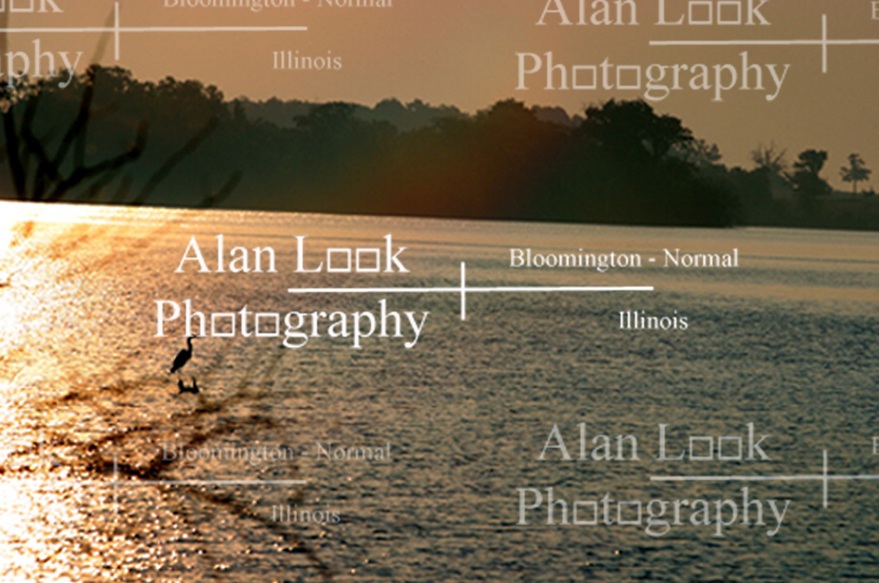 Great Blue Heron sitting on stump in lake (Photo by Alan Look)