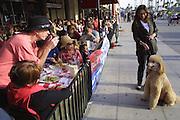Faith D'Aluisio walks the dog while visiting Brian Braff and his wife Nicole and their poodle at their beach house near Santa Monica, Los Angeles, CA. On the boardwalk in Venice Beach, California.