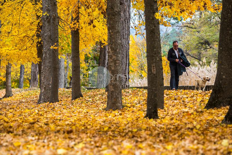 Arces amarillos (Acer sp.) Uña. Parque Natural de la Serranía de Cuenca. Cuenca ©ANTONIO REAL HURTADO / PILAR REVILLA