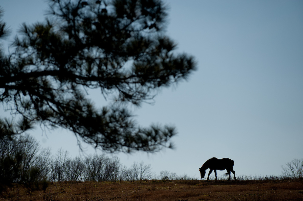 January 11, 2012; Madison, GA, USA; Horses in country in Morgan County. Photo by Kevin Liles/kevindliles.com