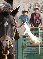 The American West - A Rich Heritage of Cowboys, Horses, Rodeos, and the Wild Western Life! Stock. Images. Canon.