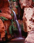 Elves Chasm, Royal Arch Creek, Colorado River mile 116.5, Grand Canyon National Park, Arizona, USA; 6 May 2008; Pentax 67II, Velvia 100