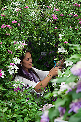 © licensed to London News Pictures. LONDON, UK  23/05/2011. Chelsea Flower Show, Press Day. Gardener putting finishing touches to a display.  Please see special instructions for usage rates. Photo credit should read Bettina Strenske/LNP