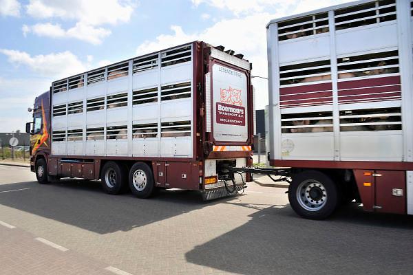Nederland, Nijmegen, 7-5-2012Een vrachtwagen met varkens op weg naar het slachthuis.Foto: Flip Franssen/Hollandse Hoogte
