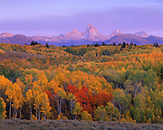 Idaho; near Felt, Idaho and Idaho/Wyoming border. Sunset on Grand Teton and fall aspens.