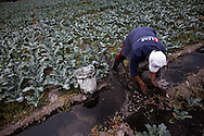 A Farmer directs water from a canal in Xochimilco in Mexico city used to create fertile soil for intensive agriculture. The technique has remained the same since before the Aztecs.
