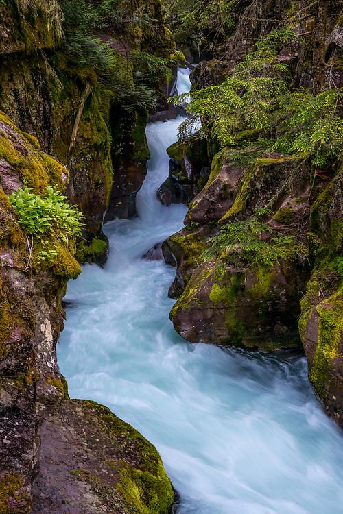 Avalanche Creek tumbles down through lush Alpine vegetation in Glacier National Park in Montana