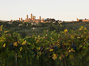 The hilltop, medieval town of San Gimignano, a UNESCO Heritage Site, seen over a vineyard in Tuscany, Italy