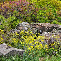 """""""Flowers and Stone""""<br /> <br /> The bounties of spring can be seen in this lovely image of large boulders surrounded by colorful wildflowers!!<br /> <br /> The Blue Ridge Mountains by Rachel Cohen"""