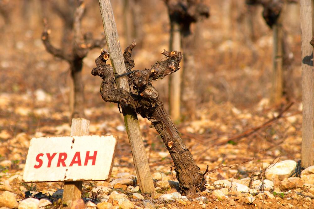 Syrah vine and sign at La Truffe de Ventoux truffle farm, Vaucluse, Rhone, Provence, France