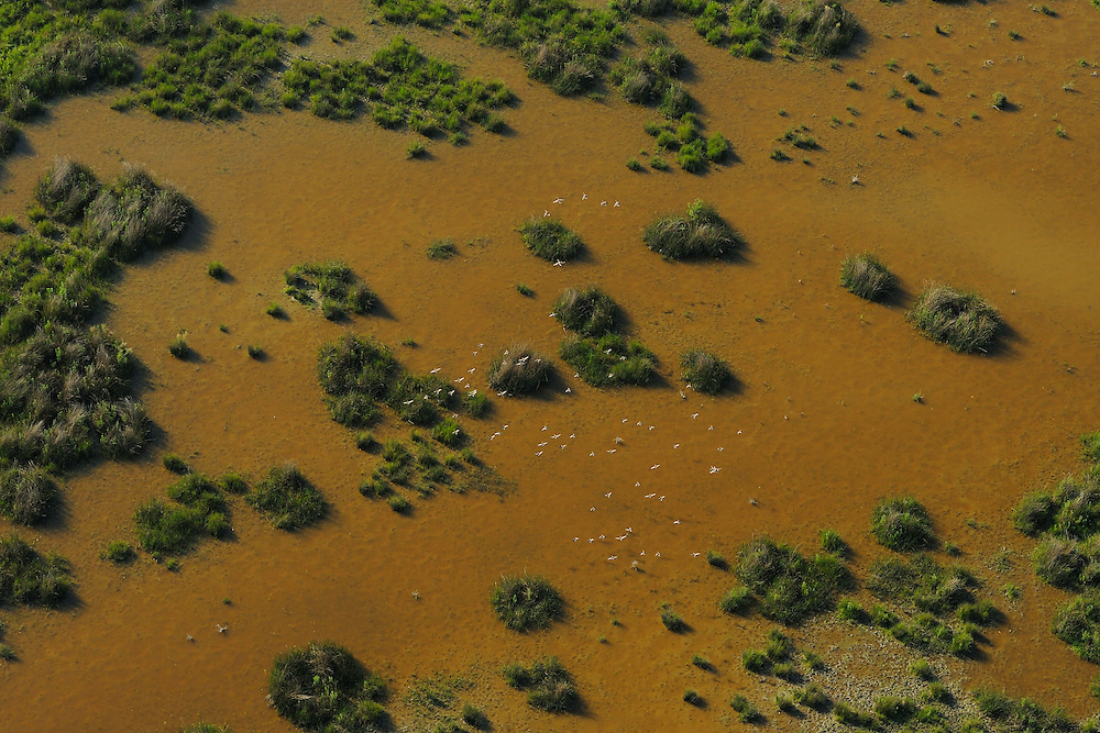 Aerials over the Danube delta rewilding area, Romania