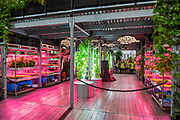 The Ikea and Tom Dixon: Gardening will save the world stand, including hydroponic plants - Press preview day at The RHS Chelsea Flower Show.