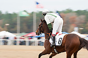 Colonial Cup - Camden, South Carolina. To the post