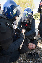 © Licensed to London News Pictures. 19/10/2011. Crays Hill, UK. A female activist being arrested by police. Residents at Dale Farm, the UK's largest illegal traveller site being evicted today (19/10/2011) following a long dispute with Basildon Council . Travellers and activist had barricaded themselves in to the site in an attempt to prevent their eviction. Photo credit: Ben Cawthra/LNP