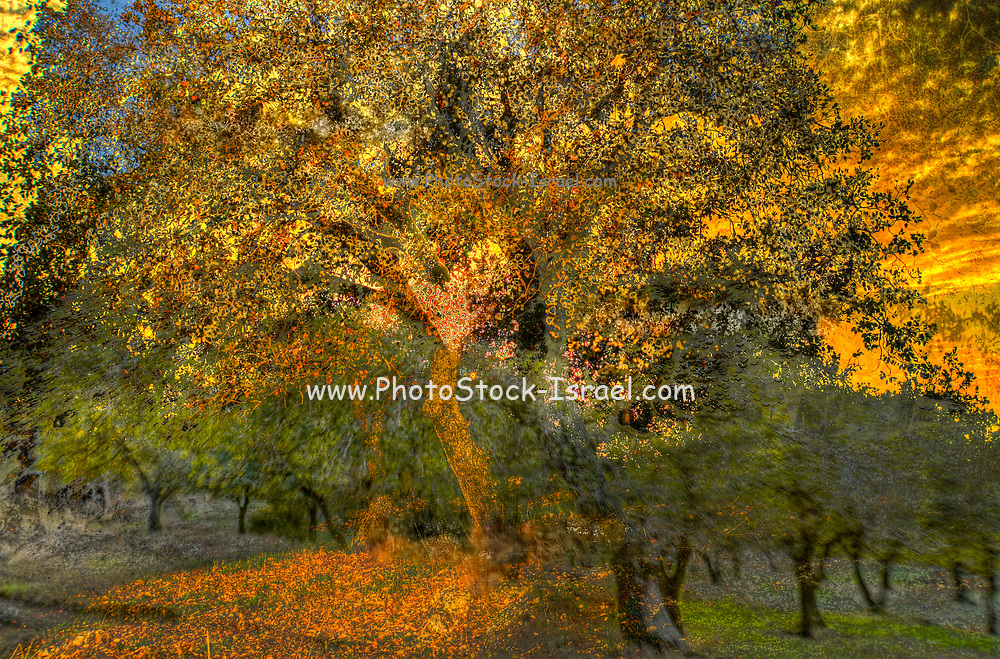 Golden Autumn colours in a forest