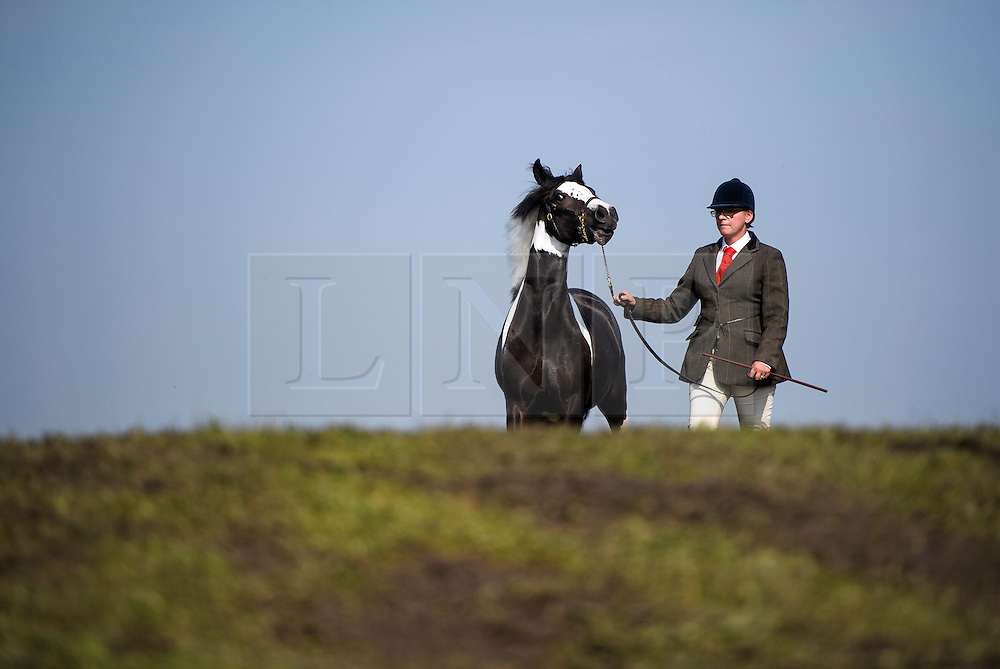 © London News Pictures. 12/05/2016. Windsor, UK. DAWN INGRAM poses with her horse BURGHWALLIS DIPPITY DOO DARR (correct spelling) which is competing in the Coloured Young Stock event, at the first day of the 2016 Royal Windsor Horse Show, held in the grounds of Windsor Castle in Berkshire, England. The opening day of the event was cancelled due to heavy rain and waterlogged grounds. This years event is part of HRH Queen Elizabeth II's 90th birthday celebrations.  Photo credit: Ben Cawthra/LNP