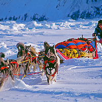 Explorer Will Steger mushes guides his dog team on the frozen Arctic Ocean, Northwest Territories, Canada.