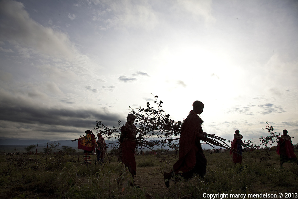 In one synchronized movement, women remove the brush fences that surrounded the ceremonial fire.  Outside Kisima, Samburu County, Kenya.  August 22, 2013.