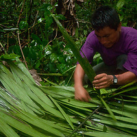 Wilder, a Yanayacu Indian, weaves palm leaves together for a rain shelter in Peru's Amazon Jungle.