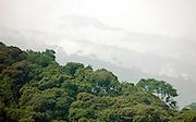 Misty tree lined mountain tops near Kigali, Rwanda