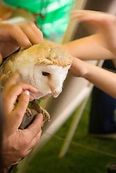 Children touching an Owl at fun day,