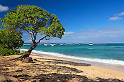 The Coast and Beach of North Shore in Hawaii
