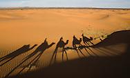 Shadows of camel train in the Sahara Desert near Merzouga, Morocco