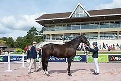 Kerstin Larsson Englund, (SWE), Black Music, - Horse Inspection Para Dressage - Alltech FEI World Equestrian Games™ 2014 - Normandy, France.<br /> © Hippo Foto Team - Jon Stroud<br /> 25/06/14