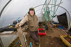 Barry George in his poly tunnel. Feature on the community on the island of Ulva, who have been awarded £4.4m in funding for their island buyout.