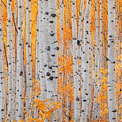 Autumn Colors - Western USA