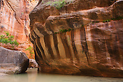 The Narrows on the Virgin River, Zion National Park, Utah.
