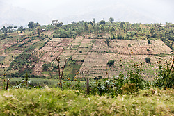 Planted Fields