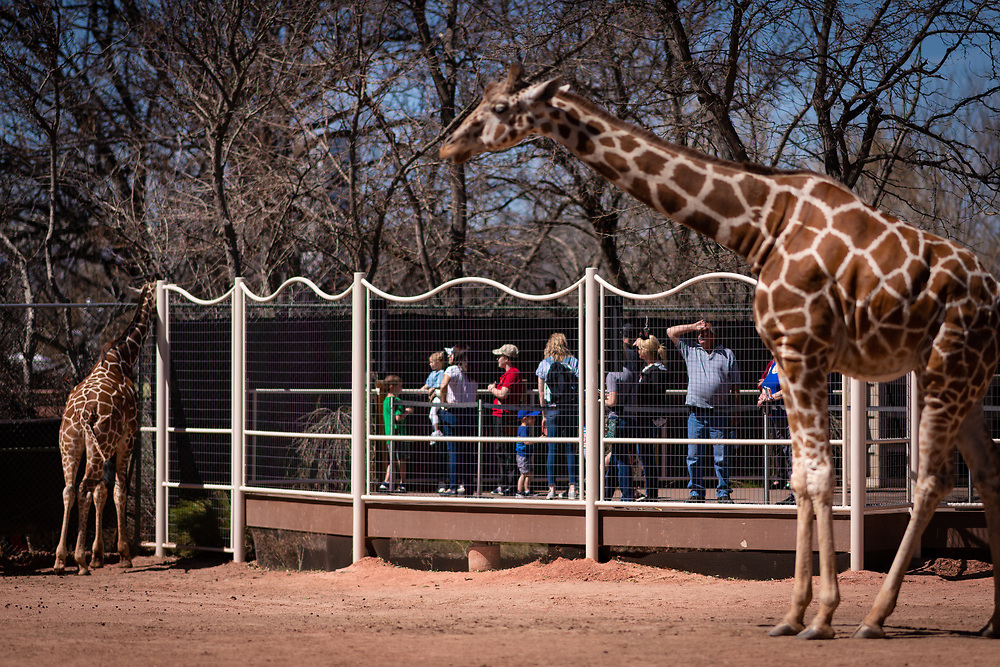 Visitors see the giraffes up close from the viewing platform.