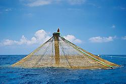 workers feeding Kona Kampachi, Hawaiian yellowtail, aka almaco jack or kahala, Seriola rivoliana, in 3,000-cubic-meter submersible pen installed in open ocean just off Kona Coast, Kona Blue Water Farms, Big Island, Hawaii, USA, Pacific Ocean