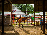 26 JUNE 2019 - CENTRAL CITY, IOWA: The beef barn at the Linn County Fair. Summer is county fair season in Iowa. Most of Iowa's 99 counties host their county fairs before the Iowa State Fair, August 8-18 this year. The Linn County Fair runs June 26 - 30. The first county fair in Linn County was in 1855. The fair provides opportunities for 4-H members, FFA members and the youth of Linn County to showcase their accomplishments and talents and provide activities, entertainment and learning opportunities to the diverse citizens of Linn County and guests.       <br /> PHOTO BY JACK KURTZ
