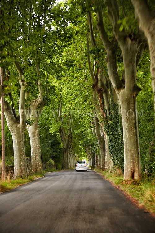 View of a tree lined road heading into Provence, France