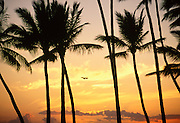 Jet airplane between palms at sunset