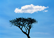 Tree and Cloud, Maasai Mara National Reserve, Narok County