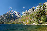 Grand Teton looms above Cascade Canyon along the shore of Jenny Lake on a September afternoon.