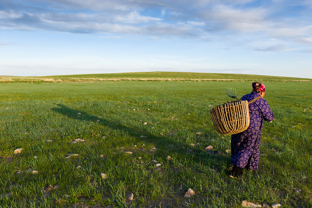 An elderly nomad woman returns home with a basket full of horse droppings, to be used for fuel, Dundgov Province, Mongolia. Photo © Robert van Sluis