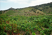 Collioure. Roussillon. France. Europe. Vineyard.