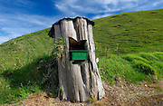 Mailbox set into tree trunk, North Island, New Zealand