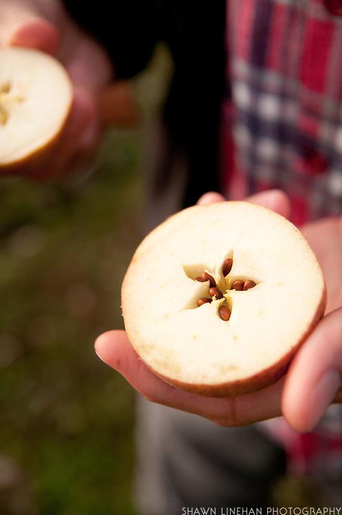 James Kohn checks a cider apple on his orchard at Wandering Aengus Cidery in Salem, Oregon