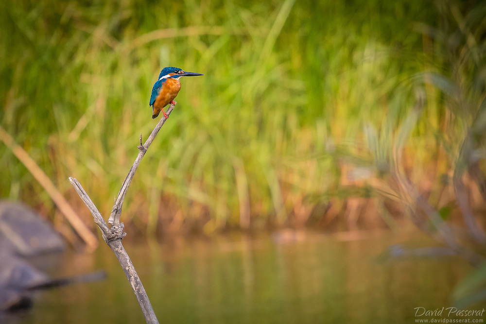 Kingfisher's best sop to fish are ponds and clear rivers and non windy areas. They stay perched over the water, ready to dive..