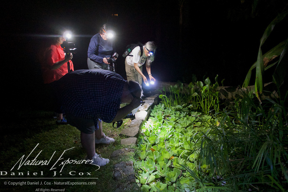 Night shoot with tree frogs. Costa Rica.