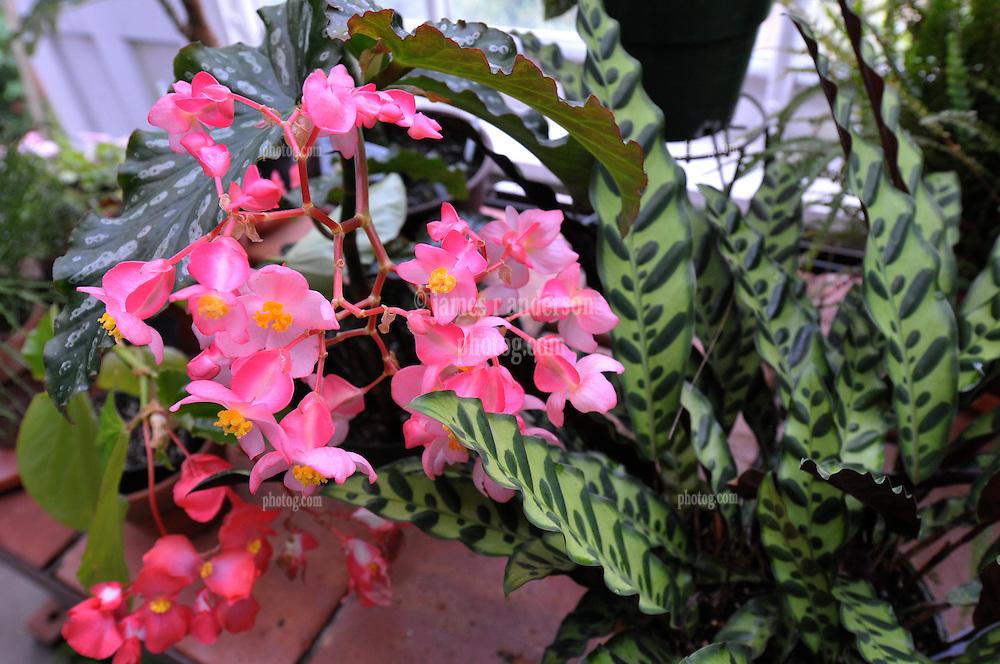 New Haven Autumn Colors inside the Greenhouse at Edgerton Park