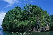 limestone hillock, Los Haitises National Park, Samana, Dominican Republic ( Caribbean Sea )